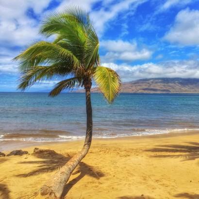 palm-tree-410x410